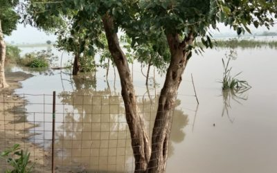 Anou's blog The Yamuna has flooded Project WHY: Coping in the Face of a Ruthless Tide